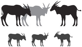 Common eland antelope silhouettes. Common eland antelope, African safari wild animal vector silhouettes Stock Photos