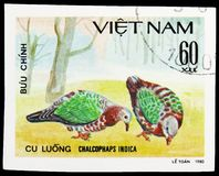 Common Emerald Dove (Chalcophaps indica), Doves serie, circa 1981. MOSCOW, RUSSIA - SEPTEMBER 26, 2018: A stamp printed in Vietnam shows Common Emerald Dove ( royalty free stock photo