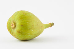 Common fig Ficus carica  Royalty Free Stock Image