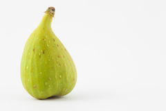 Common fig Ficus carica  Stock Images
