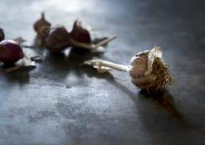 Common Garlic, Allium ,Garlic, onions Royalty Free Stock Photo