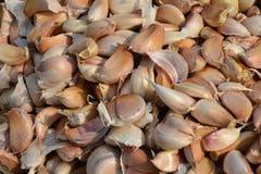 Common Garlic. Allium Garlic in thai kitchen Royalty Free Stock Photos