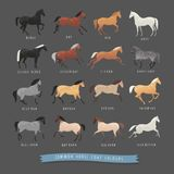 Common horse coat colours. Such as black and bay, silver gene horse and dapple grey horse, roan and dun coat horse and others vector illustration