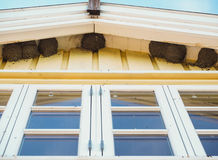 Common house-martin birds nesting under eave Royalty Free Stock Image