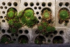 Common house root in gray concrete blocks with different sized round holes royalty free stock photo