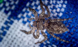 Common house spider Stock Image