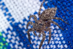 Common house spider Royalty Free Stock Photo