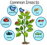 Common Insect on plant vector illustration