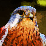 Common Kestrel. Digital painting of a common kestrel bird of prey Royalty Free Stock Images