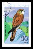 Common Kestrel (Falco tinnunculus), Birds of Prey serie, circa 1982. MOSCOW, RUSSIA - SEPTEMBER 26, 2018: A stamp printed in Vietnam shows Common Kestrel (Falco stock photo