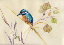 Common Kingfisher bird. Watercolor Animal Collection: Common Kingfisher bird stock illustration