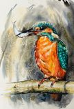 Common Kingfisher watercolors painted. stock image