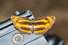Common Lascar butterfly. Close up of Common Lascar (Neptis hordonia) butterfly perching on a tripod head royalty free stock image