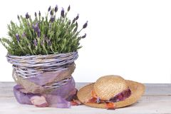 Common lavender plant in a lilac basket royalty free stock photos