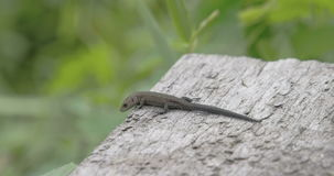A common lizard on top of the roof in the forest Royalty Free Stock Photos