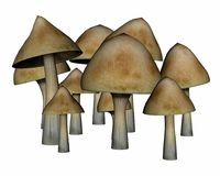 Common mushrooms - 3D render Royalty Free Stock Photo