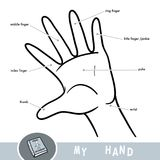 Common names for fingers of hand. Vector black and white illustration for children. Common names for fingers of hand. Cartoon picture about human body part Royalty Free Stock Photography