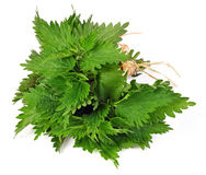Free Common Nettle Stock Images - 53426624