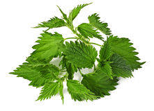 Common nettle. (urtica) isolated over white background royalty free stock images