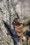 Bat on tree Stock Photo
