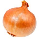 Common onion bulb Stock Photos