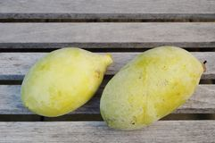 Common pawpaw fruit Stock Images