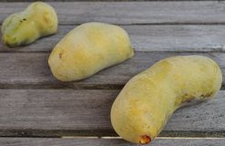 Common pawpaw fruit Royalty Free Stock Photography