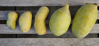 Common pawpaw fruit Stock Photo