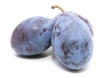 Common plum Stock Images