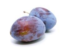 Common plum Royalty Free Stock Photo
