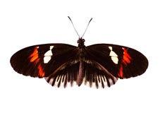 Common postman butterfly Heliconius melpomene isolated on white background stock photo
