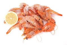 Common prawn Royalty Free Stock Photo