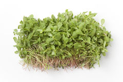 Common purslane Stock Images