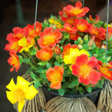 common purslane flowers Stock Photo
