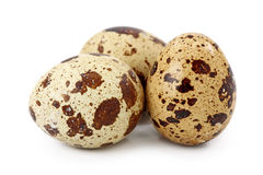 Common Quail eggs Royalty Free Stock Images