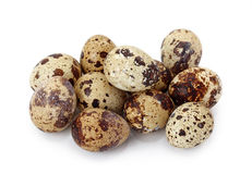 Common Quail eggs Stock Photos