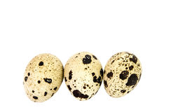 Common Quail eggs Stock Photo