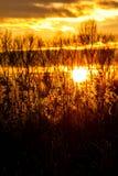 Common reed Stock Photo
