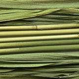 Common reed texture Stock Image