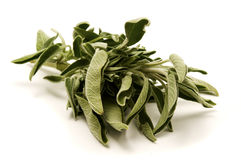 Common sage Royalty Free Stock Photos