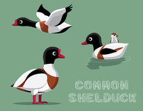Common Shelduck Cartoon Vector Illustration Stock Photo