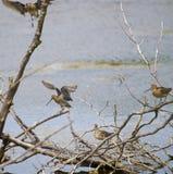 Common snipe bird group D Stock Image