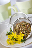Common St. John's wort tea - hypericum perforatum Royalty Free Stock Photography