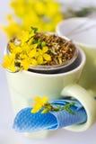 Common St. John's wort tea - hypericum perforatum Royalty Free Stock Images