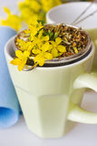 Common St. John's wort tea - hypericum perforatum Stock Image