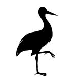 Common stork silhouette Stock Image