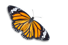 Free Common Tiger Butterfly Stock Photo - 78409520