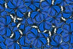 Common Tiger Butterfly (Danaus genutia) Stock Photos