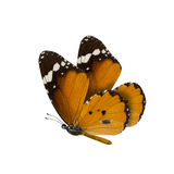 Common tiger butterfly , Danaus Genutia , monarch butterfly isol Stock Image