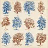 Common trees illustrations set Royalty Free Stock Photography
